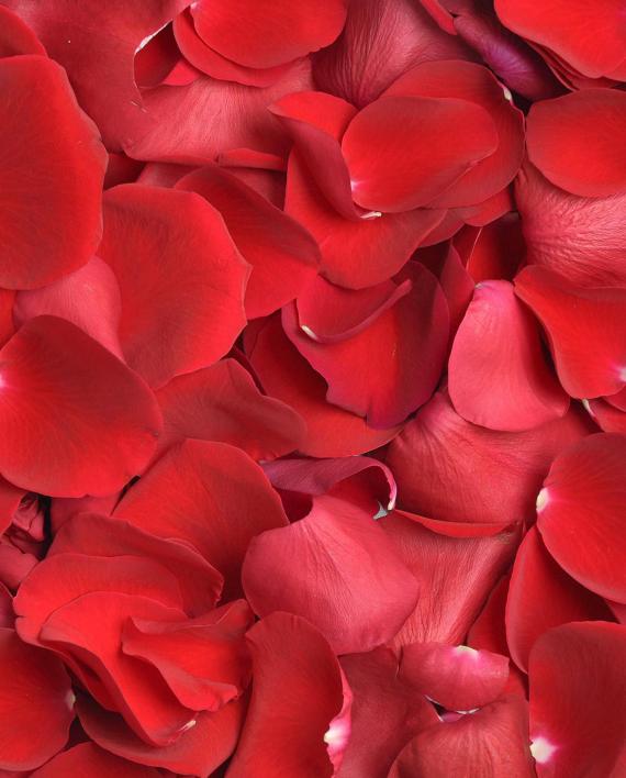 petale-de-trandafir